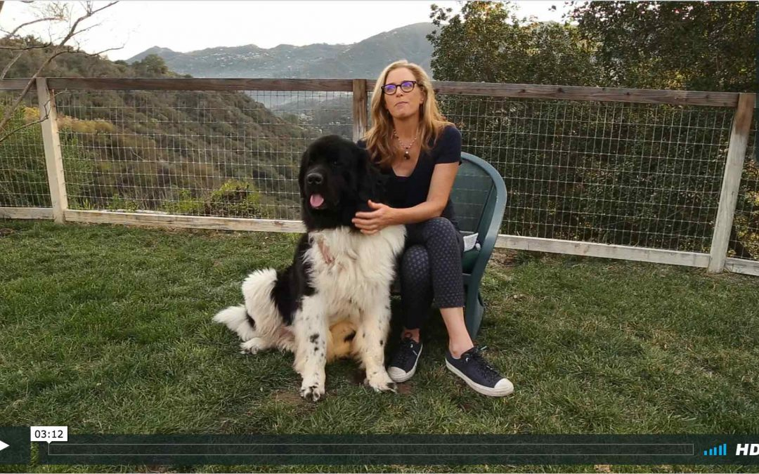 Watch Hermes and Sahaja Demonstrate SAHAJA's WAG Relaxation Blend for Dogs (and people)