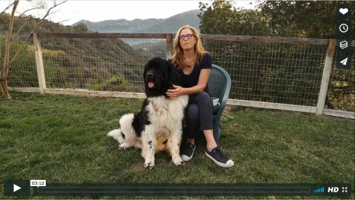 Sahaja and Hermes - WAG Relaxation Blend for Dogs and People